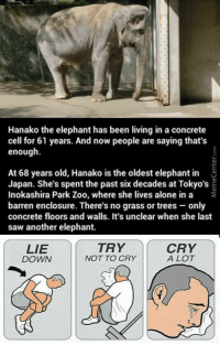Poor elephant :(: Hanako the elephant has been living in a concrete  cell for 61 years. And now people are saying that's  enough.  At 68 years old, Hanako is the oldest elephant in  Japan. She's spent the past six decades at Tokyo's E  Inokashira Park Zoo, where she lives alone in a  barren enclosure. There's no grass or trees only  concrete floors and walls. It's unclear when she last  saw another elephant.  CRY  TRY  LIE  A LOT  NOT TO CRY  DOWN Poor elephant :(