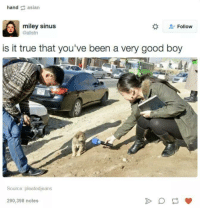 Asian, Dank, and True: hand asian  miley sinus  Follow  @allstn  is it true that you've been a very good boy  Source: pleatedjeans  290,398 notes