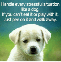 Dog: Handle every stressful situation  like a dog.  If you can't eat it or play with it,  Just pee on it and walk away.
