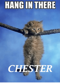 You can do it!: HANG IN THERE  CHESTER You can do it!