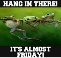 hang in there: HANG IN THERE!  IT'S ALMOST  FRIDAY!