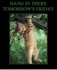 hang in there: HANG IN THERE  TOMORROW'S FRIDAY
