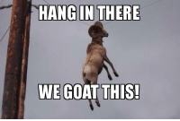hang in there: HANG IN THERE  WE GOAT THIS!
