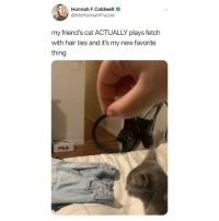 Friends, Memes, and Twitter: Hannah F Caldwell  @MsHannahFrazier  my friend's cat ACTUALLY plays fetch  with hair ties and it's my new favorite  thing i cannot handle this 😭 (@mshannahfrazier - @rezadaroof on Twitter)