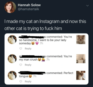 Instagram, Pussy, and Fuck: Hannah Solow  @hamstertalk  I made my cat an Instagram and now this  other cat is trying to fuck him  es commented: You're  so handsome, I want to be your lady  someday  Reply  mis commented: You're  my man crush7h  Reply  commented: Perfect  tongue 7h  Reply Pussy runs the world