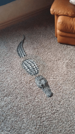 hap-less:  starkeaton:  starkeaton: Hey get out of there noclip is strictly prohibited in my home    Interior crocodile aligator : hap-less:  starkeaton:  starkeaton: Hey get out of there noclip is strictly prohibited in my home    Interior crocodile aligator