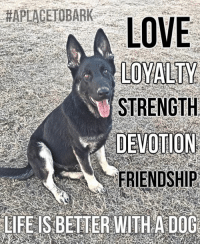 "Dogs, Life, and Love: HAPLACENDBARK  LOVE  LOYALTY  STRENGTH  DEVOTION  FRIENDSHIP  LIEEIS BETTER WITH A DOG Meet ""Von""💕 He is one of 6 dogs, ""A Place To Bark"" has rescued & is in the screening/training process, to potentially be a service dog for a veteran with PTSD.   With millions of dogs in shelters all across the county, it's a chance of a lifetime. It's important to realize that there is heavy criteria to be a service dog.  Statistically 75% wash out, due to temperament issues or health.  Hips being one of the biggest health issues.   The beauty of our program is, even if they don't make the cut to be a service dog, they will make loyal & loving pets. And in our program we will find them loving homes & they have a safety-net with our program for life. Seeing thousands of dogs each year & taking hundreds into our program, we are excited at the opportunity to save yet another life of a shelter dog, but to also give back, to those who have fought for our freedoms.  Win/Win for all involved❤️ I will keep you posted on their progress & when ready, we will be filming the trip to the training campus!   #everylifematters #aplacetobark #everydoghasaplace"