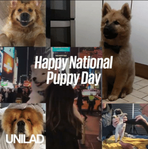 Dank, Puppies, and Best: Hapoy National  Puphy Day  UNI Happy National Puppy Day! Here's why puppies really are the best... 😍🐶