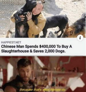 Dogs, Chinese, and Heroes: HAPPIEST.NET  Chinese Man Spends $400,000 To Buy A  Slaughterhouse & Saves 2,000 Dogs.  Because that's what heroes do Not all heroes wear capes.