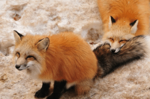 happifying-things:nom: happifying-things:nom