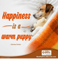 dragonfly: Happiness  is a  Warm Puppy  Charles Schulz  Oistock com Fly dragonfly  Healthy  Mercola.com  Healthy Pets Mercola.com