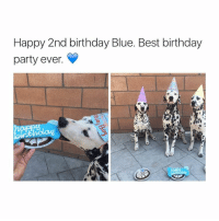 Happy 2nd birthday Blue. Best birthday  party ever. I want a 4.0