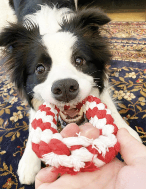 Happy and playful: Happy and playful
