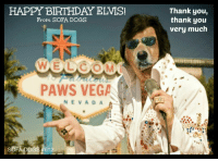 HAPPY BDAY ELVIS #612 Always loved watching his movies while lying on the floor in the den as a kid. See comments for a fav ( locally relevant ) song!: HAPPY BIRTHDAY ELVIS!  Thank you,  thank you  very much  From SOFA DOGS  WELCOM  PAWS VEGA  NEVADA HAPPY BDAY ELVIS #612 Always loved watching his movies while lying on the floor in the den as a kid. See comments for a fav ( locally relevant ) song!