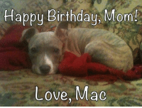 The Grunts are helping me surprise Mom with a little message. Today is my mom's birthday! I love her sooo much! She works really hard to take care of me and my pack, plus so many temporaries who land here at Mac's Mission. She doesn't care if we have janky legs, stinky mange or missing parts...she loves us all! (Even the bottle babies who keep her up all night!)  I just wanted to tell my mom that I love her and I'm glad I'm her boy. You have given me the most amazing life, that's why I wag my tail so hard that I bruise your legs!  The Grunts would like to add a thank you too...thanks for dreaming BIG and inspiring us and so many others. This world is a better place because you are in it.  We love you and are honored to be a part of this mission. 💕🐶  Happy Birthday, Mom! I love you more than bully sticks!  Love, Macalwaysyourdivaboy: Happy Birthday Mom!  Love, Mac The Grunts are helping me surprise Mom with a little message. Today is my mom's birthday! I love her sooo much! She works really hard to take care of me and my pack, plus so many temporaries who land here at Mac's Mission. She doesn't care if we have janky legs, stinky mange or missing parts...she loves us all! (Even the bottle babies who keep her up all night!)  I just wanted to tell my mom that I love her and I'm glad I'm her boy. You have given me the most amazing life, that's why I wag my tail so hard that I bruise your legs!  The Grunts would like to add a thank you too...thanks for dreaming BIG and inspiring us and so many others. This world is a better place because you are in it.  We love you and are honored to be a part of this mission. 💕🐶  Happy Birthday, Mom! I love you more than bully sticks!  Love, Macalwaysyourdivaboy