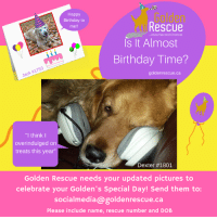 """Is your dog's birthday coming up? If so, we would love to have a recent photo to share with our followers on their special day. Please email a recent photo at least one month ahead of their birthday to socialmedia@goldenrescue.ca. Please include your dog's name, GR number, and birthdate.  #goldenrescue #rescuedog #adoptdontshop: Happy  Birthday to  me!!  Golden  Rescue  .About Second Chances  Is It Almost  Birthday Time?  Jack #1753  goldenrescue.ca  """"I think I  overindulged on  treats this year""""  Dexter #1801  Golden Rescue needs your updated pictures to  celebrate your Golden's Special Day! Send them to:  socialmedia@goldenrescue.ca  Please include name, rescue number and DOB Is your dog's birthday coming up? If so, we would love to have a recent photo to share with our followers on their special day. Please email a recent photo at least one month ahead of their birthday to socialmedia@goldenrescue.ca. Please include your dog's name, GR number, and birthdate.  #goldenrescue #rescuedog #adoptdontshop"""