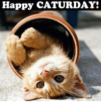 Caturday at last!: Happy CATURDAY! Caturday at last!