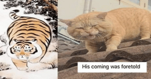 Happy Caturday, everyone!#cats #funnycats #catmemes #caturday #funnymemes #caturdaymemes #animalmemes: Happy Caturday, everyone!#cats #funnycats #catmemes #caturday #funnymemes #caturdaymemes #animalmemes