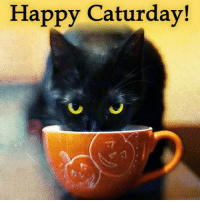Happy Caturday cat people :): Happy Caturday! Happy Caturday cat people :)
