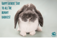 Hoppy #Fathers' Day!: HAPPY FATHERS' DAY  TO ALL THE  BUNNY  DADDIES!  HOUSE RABBIT  SOCIETY Hoppy #Fathers' Day!