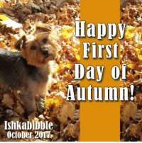 Boxing, Memes, And Calendar: Happy First Day OR Autumn! INhkabibble October  2017