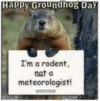 Groundhog Day: Happy Groundhog Day  I'm a rodent,  not a  meteorologist!  via Love ThisPic.com