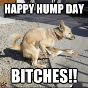 75+ Dirty Memes & Funny Dirty Jokes Making Your Mind Dirty | TextMemes: HAPPY HUMP DAY  BITCHES! 75+ Dirty Memes & Funny Dirty Jokes Making Your Mind Dirty | TextMemes