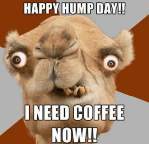 Hump Day, Memes, and Coffee: HAPPY HUMP DAY!!  ONEED COFFEE  NOW!! Collection : 60 Wednesday Coffee Memes, Images & Pics to Get Through ...