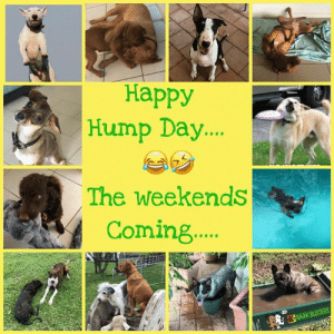 Hump Day, Memes, and Happy: Happy  Hump Day..  The weekends  Coming.  K BUSTERS #HumpDay