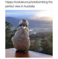 Picture of the day (@hilarious.ted): Happy Kookaburra photobombing the  perfect view in Australia Picture of the day (@hilarious.ted)