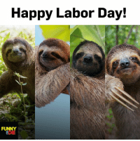 Every day is Labor Day when you're a sloth! Seriously, they don't do shit.: Happy Labor Day!  FUNNY  DIE Every day is Labor Day when you're a sloth! Seriously, they don't do shit.