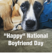 "Who came up with this shit? nationalboyfriendday eatadick love persofinstagram grouchydog: ""Happy National  Boyfriend Day Who came up with this shit? nationalboyfriendday eatadick love persofinstagram grouchydog"