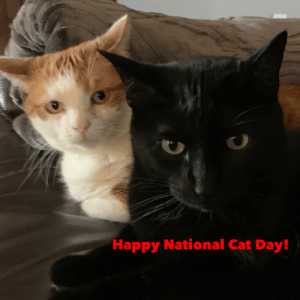 MEOW_IRL: Happy National Cat Day! MEOW_IRL
