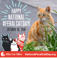 HAPPY  NATIONAL  #FERALCAT DAY!  OCTOBER 16, 2016  Alley Cat Allies National FeralcatDay.org Today is the day! Happy National #FeralCatDay! Let's work together to protect & improve the lives of all cats, in all communities. Find out more at www.NationalFeralCatDay.org