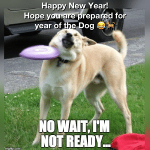 """The2OC on Twitter: """"Happy year of the dog! #Tet #HappyNewYear ...: Happy New Year  Hope you are prepared for  year of the Dog  NO WAIT,TM  NOT READY  imgflip.com The2OC on Twitter: """"Happy year of the dog! #Tet #HappyNewYear ..."""