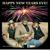 SOFA DOGS Classics: EPISODE #182 HAPPY NEW YEAR'S EVE! (and The Primate's Birthday): HAPPY NEW YEARS EVE!  SOFA DOGS SOFA DOGS Classics: EPISODE #182 HAPPY NEW YEAR'S EVE! (and The Primate's Birthday)