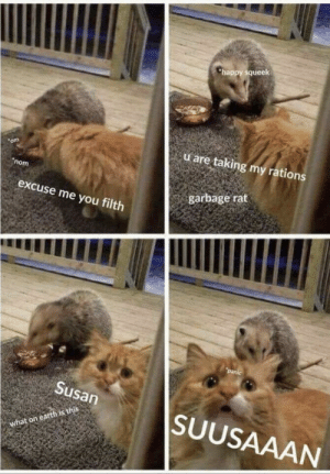 The Most ULTIMATE MEME: happy squeek  u are taking my rations  om  nom  garbage rat  excuse me you filth  panic  Susan  SUUSAAAN  what on earth is this The Most ULTIMATE MEME