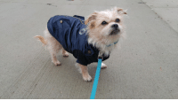 """Happy Thursday friends! Momma took me for walk earlier today! It was cold out! So I wore my nice coat from Foufou Brands! Doesnt it look so good on me? :3 Use the code""""Jasper20"""" to receive 20% off your entire purchase at; http://store.foufoubrands.com Who wants to see a puppy picture of me later tonight? :D Let me know below! ;): Happy Thursday friends! Momma took me for walk earlier today! It was cold out! So I wore my nice coat from Foufou Brands! Doesnt it look so good on me? :3 Use the code""""Jasper20"""" to receive 20% off your entire purchase at; http://store.foufoubrands.com Who wants to see a puppy picture of me later tonight? :D Let me know below! ;)"""