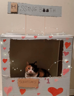 Happy Valentine's Day from Scratches the cat.: Happy Valentine's Day from Scratches the cat.