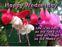 Happy Wednesday Everyone x.x.x: Happy Wednesday  Life is as tas  as we Take it  and as Tough  as we Make i  marinelareka.com Happy Wednesday Everyone x.x.x