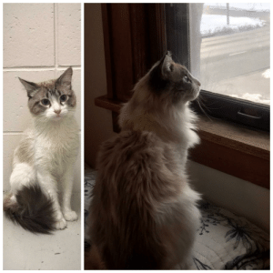 Happy Weight & Huge Flufferbutt After Being Shamefully Thrown Into The Night Dropbox of the Shelter.: Happy Weight & Huge Flufferbutt After Being Shamefully Thrown Into The Night Dropbox of the Shelter.