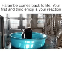 Emoji, Life, and Memes: Harambe comes back to life. Your  first and third emoji is your reaction 🍕😍 @trapgodbart