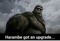 He still lives on in anime, and in our hearts: Harambe got an upgrade. He still lives on in anime, and in our hearts