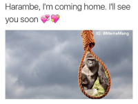 I miss you so much, I just want to be with you again: Harambe, l'm coming home. I'll see  you soon  IG: @Meme Man I miss you so much, I just want to be with you again