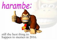 i know i'm late to the game i don't care i fucking love this dead gorilla.: harambe.  still the best thing to  happen to memes in 2016. i know i'm late to the game i don't care i fucking love this dead gorilla.