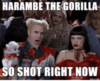 When caught between two extreme positions, just state the facts.: HARAMBE THE GORILLA  SO SHOT RIGHT NOW  made on imgur When caught between two extreme positions, just state the facts.