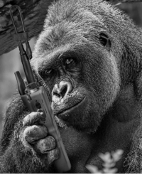 Harambe will always be on the distant end...: Harambe will always be on the distant end...