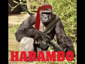 What Is Harambe
