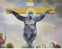 boi... religion for harambe: Haramiv boi... religion for harambe