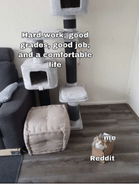Be Like, Reddit, and Work: Hard work, good  grades, good job  and a Confortable  ife  me  Reddit It be like that though